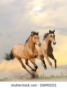 horses in dust in sunset