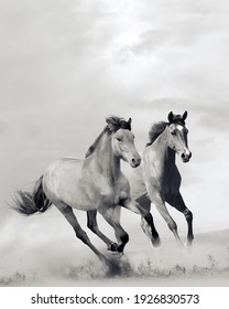 horses in dust in sunset in black and white