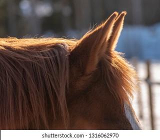Horses ears and hair