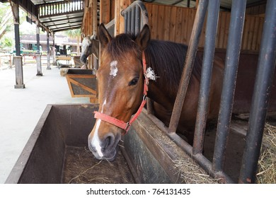 Horses eat straw in the stables