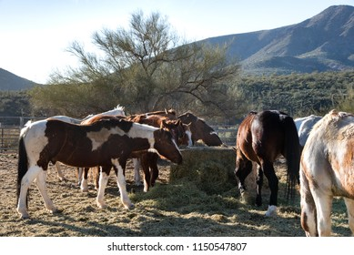 horses eating in Cave Creek, AZ