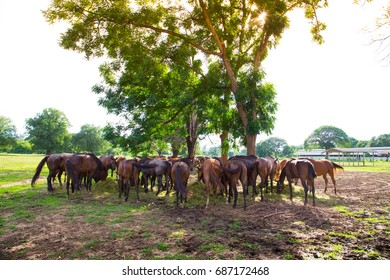 horses eating glass in farm field under shade of tree