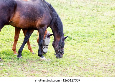 Horses eating in the grass, horizontal image