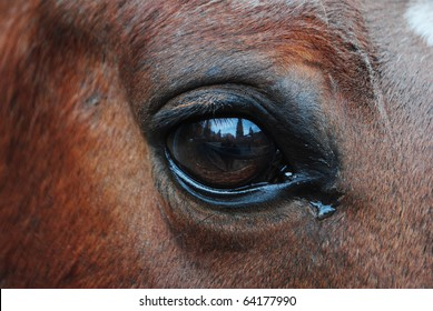 horses in the enclosure with curious eyes