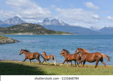Horses at the end of the world at Nationalpark Fin del mundo in Ushuaia, Argentina