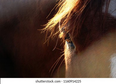 Horse's eye in sunlight