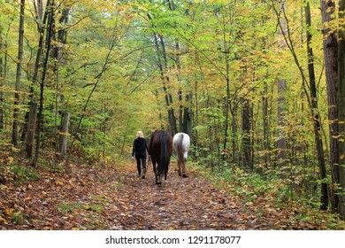 Horses in fall forest