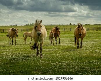 A horses family