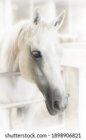 Horses in the Farm, Photo horse head shot portrait.