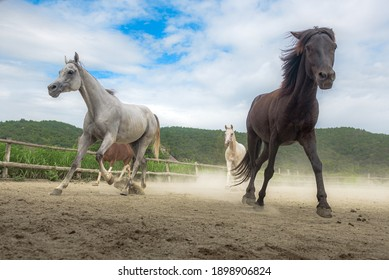 Horses in the Farm, Pony running and standing in the farm with mountain background.