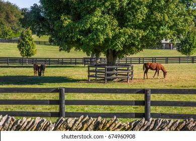 Horses feeding on green grass inside wooden fences In thoroughbredcountry, Lexington, Kentucky, USA