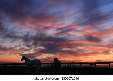 Horses in the field in the early morning and beautiful clouds in the sky before dawn.