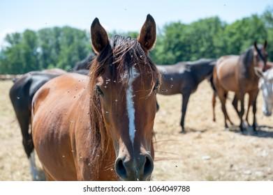 Horses in the field in Herreninsel