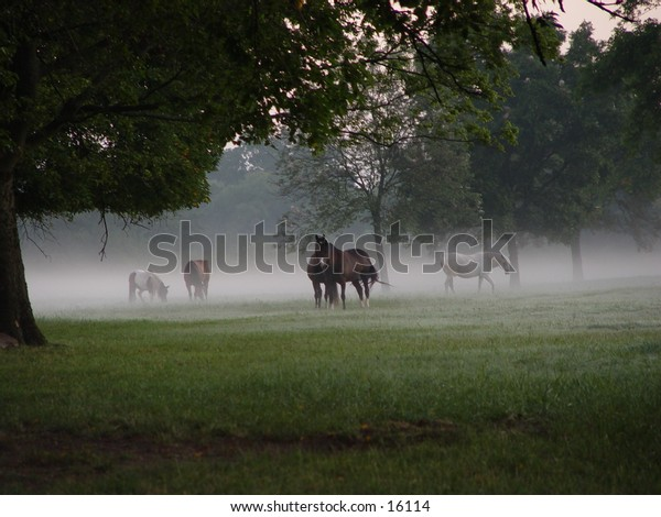 Horses in a field on a foggy morning.