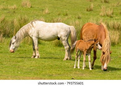 Horses and a foal on a meadow