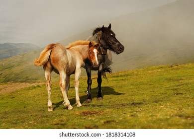 Horses and foals in the mountains, Central Balkan National Park in Bulgaria, Stara Planina. Beautiful horses in the nature on top of the hill.