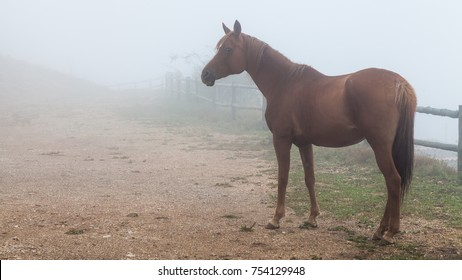 horses with foggy background