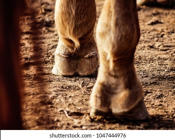 A horse's foot on the land