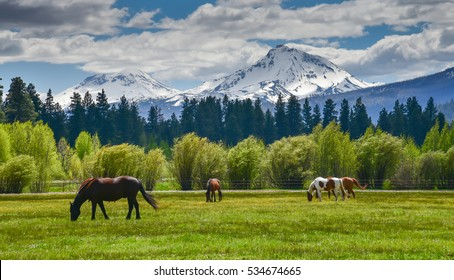 Horses in the foreground with the beautiful mountains of North Sister and Middle Sister. They are part of the Cascade Mountain Range that runs north to south through Oregon.