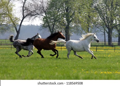 horses galloping in the woods