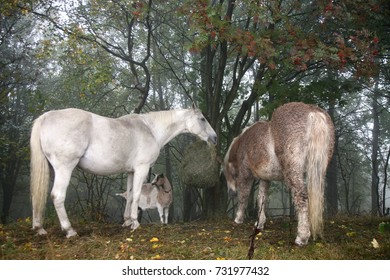 Horses and goats eating hay with net during cloudy day. Gloomy autumn day on the farm.
