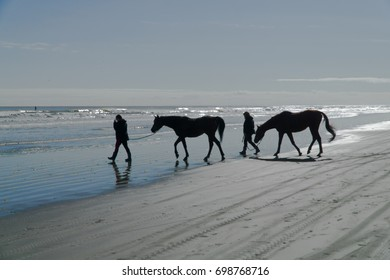 Horses going for a paddle