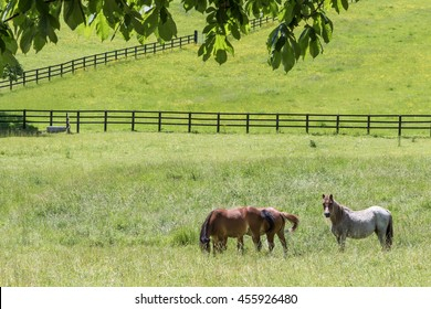 Horses graze in a grassy field in England