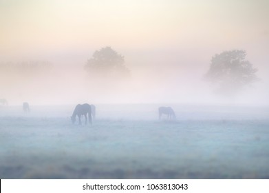 Horses graze in  mist. Dawn in the Umzimkulu Valley, South Africa.