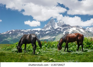 Horses graze on green meadow in the mountains against backdrop of Mount Ushba in Svaneti, Georgia. Horses eat grass on mountain meadow. Amazing mountain landscape with horses in Georgian nature