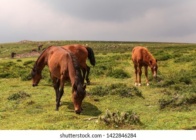 Horses graze on the Malun alpine pasture, Xinzhou, Shanxi, China.