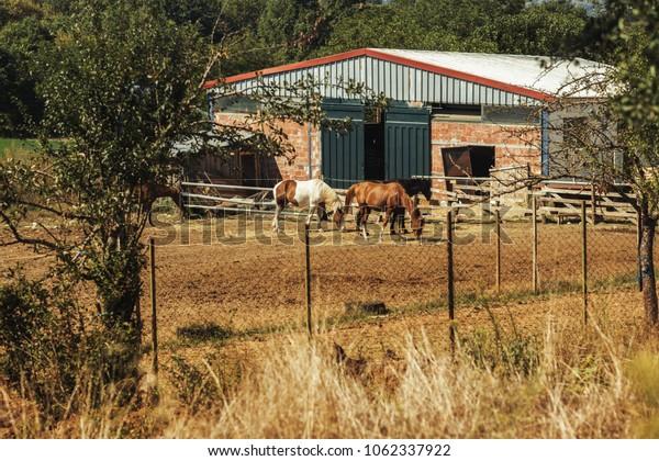 Horses graze on a meadow in Greece