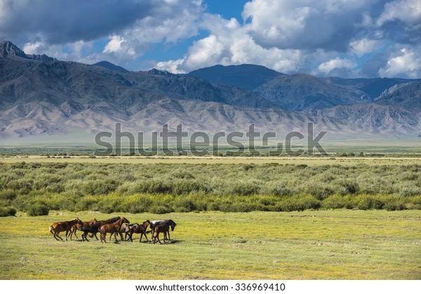 Horses graze on mountain. Almaty region. Kazakhstan