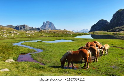 Horses grazing in Anayet plateau, Spanish Pyrenees, Aragon, Spain. Peak du Midi d Ossau is at background