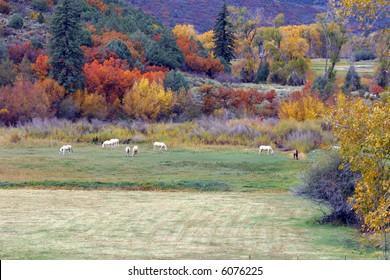 Horses grazing in the colorful field