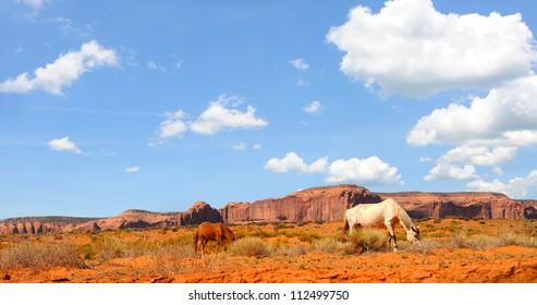 Horses grazing the desert vegetation of Monument Valley