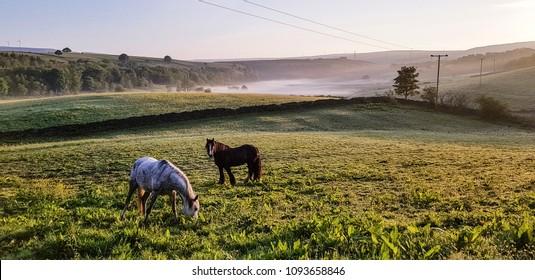 Horses grazing in a field close to Hollingworth Lake, Littleborough, Rochdale, UK