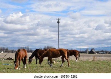 Horses are grazing in a field near a cell phone tower.  How animals and technology can coexist.