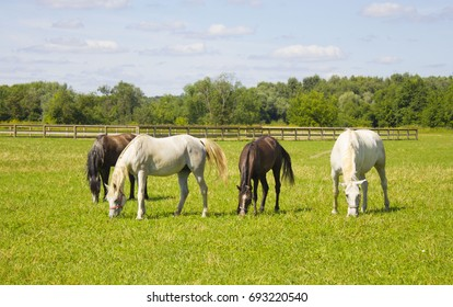 horses grazing in a field near the paddock