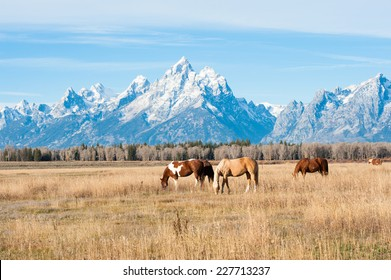 Horses grazing in Grand Teton National Park, USA