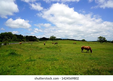 Horses grazing in the grasslands of Aso, scenery of the grasslands of Mt. Aso,