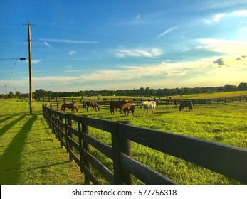 Horses grazing in green pastures. Country landscape. Kentucky, bluegrass region.