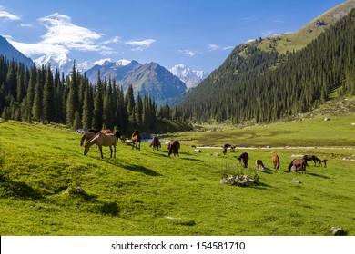 Chevaux broutant dans les montagnes du Tien Shan, Kirghizistan