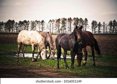 horses grazing near houses