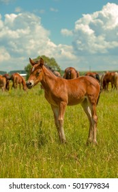 horses grazing on green meadow near the river