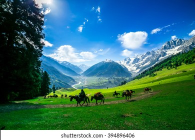 Horses Grazing on a Hill,kashmir