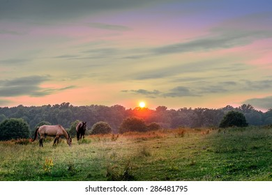 Horses grazing on a Maryland pasture at sunset