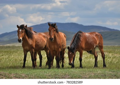 Horses are grazing on a pasture.