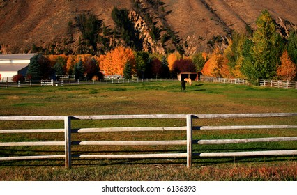 Horses grazing on peaceful autumn morning in Idaho