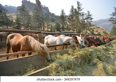 Horses grazing on straw at a ranch in Wyoming