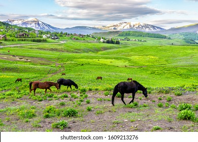 Horses grazing on trail by Crested Butte, Colorado alpine meadows on ranch by Snodgrass hiking path in summer with lush green grass